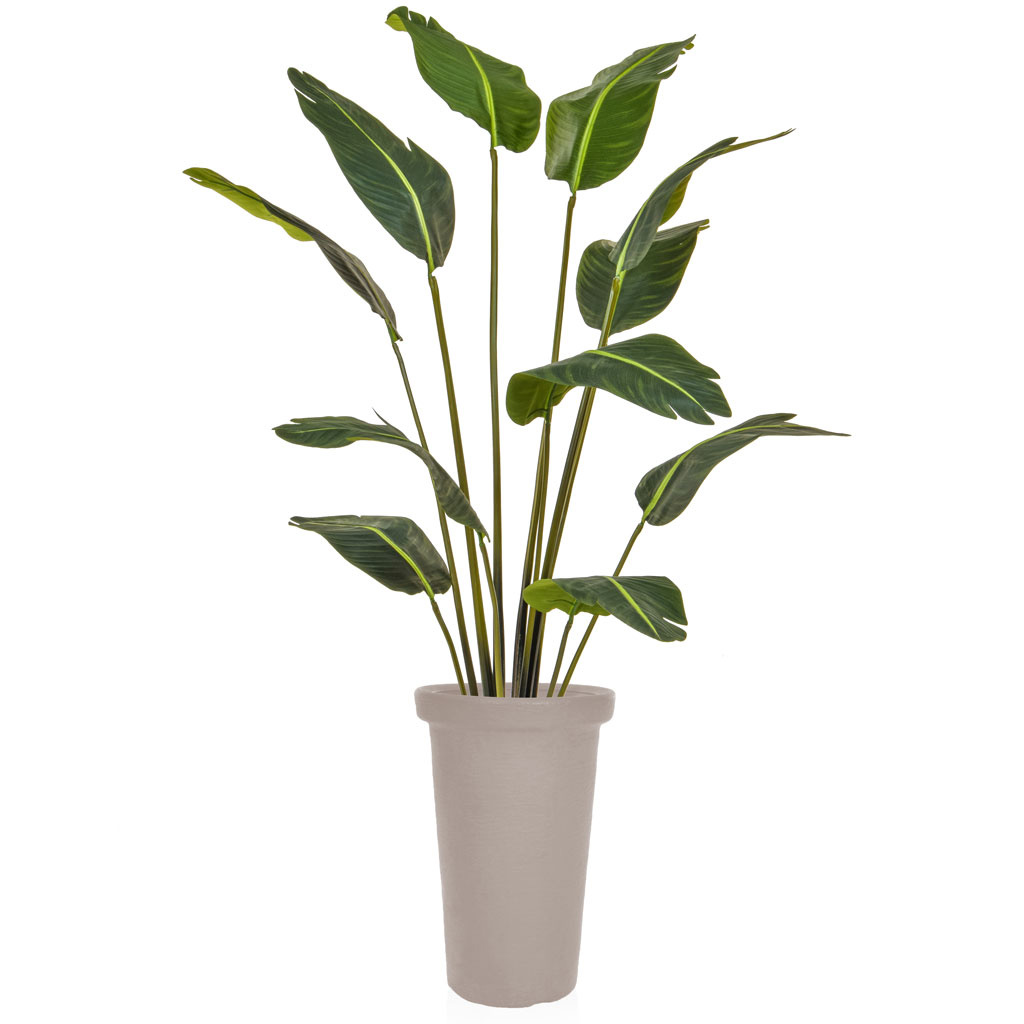AN-Plants Bird of Paradise YF FR Classic Pot 210cm
