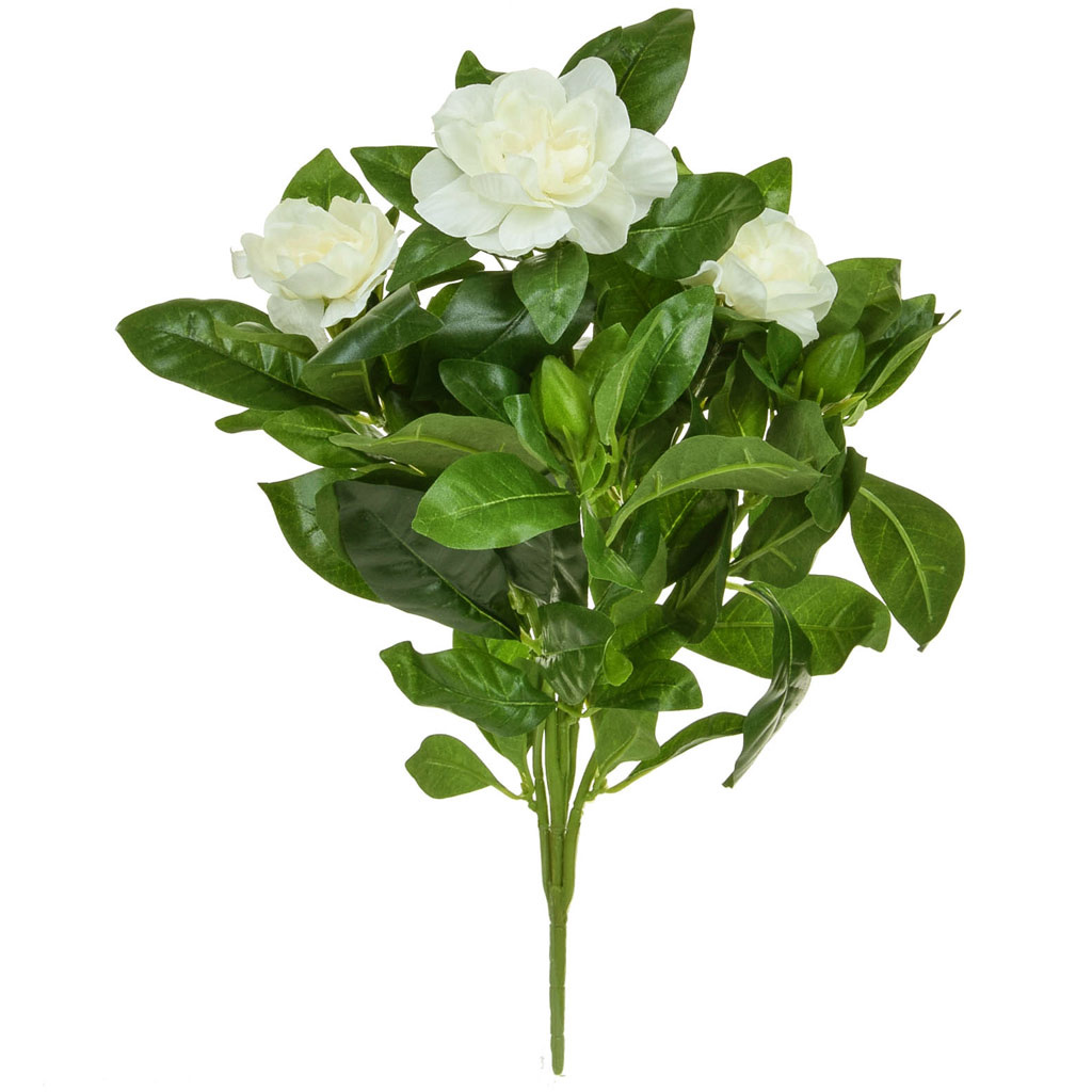 Plants Flowering Gardenia Bush Crm 40cm