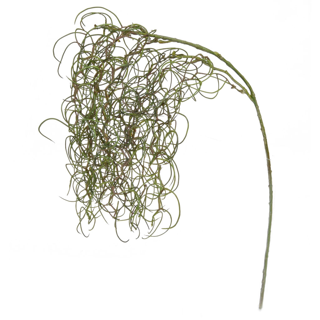 Foliage Curly Twig - Grass NG Grn 62cm