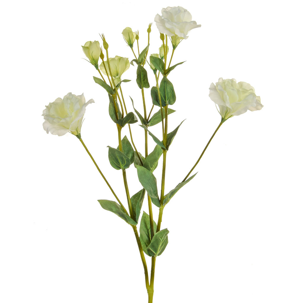 SF Eustoma NG White Green 55cm