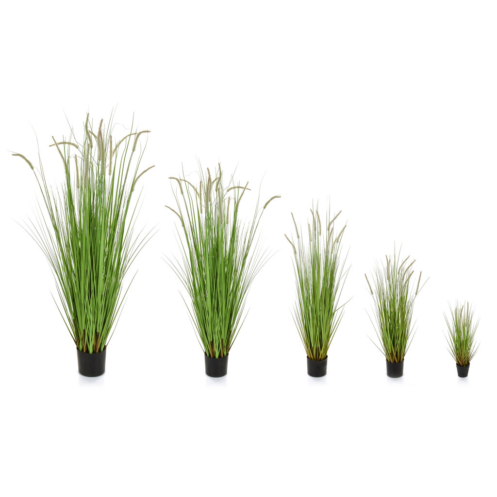 Grass Dogtail Grass C with pot 120cm