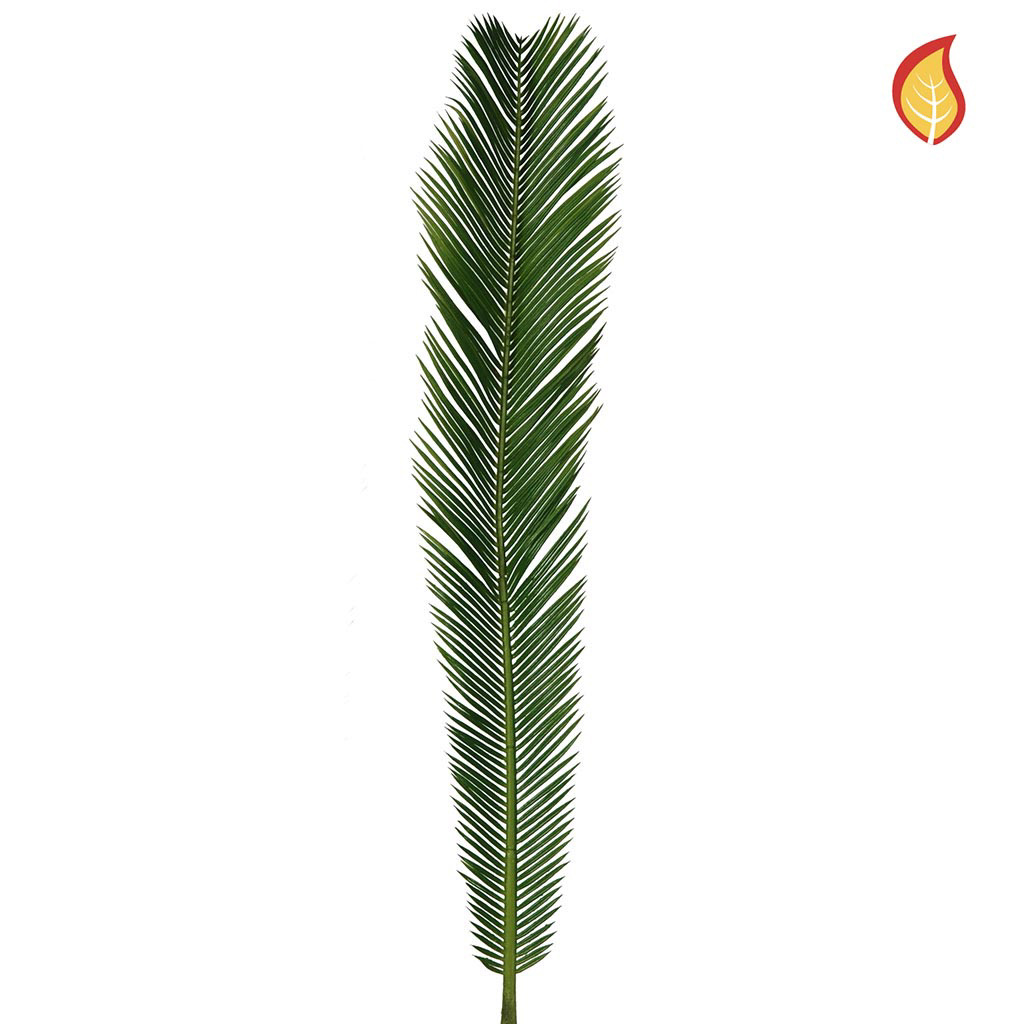 Foliage Palm Cycas Leaves Small 85cm FR