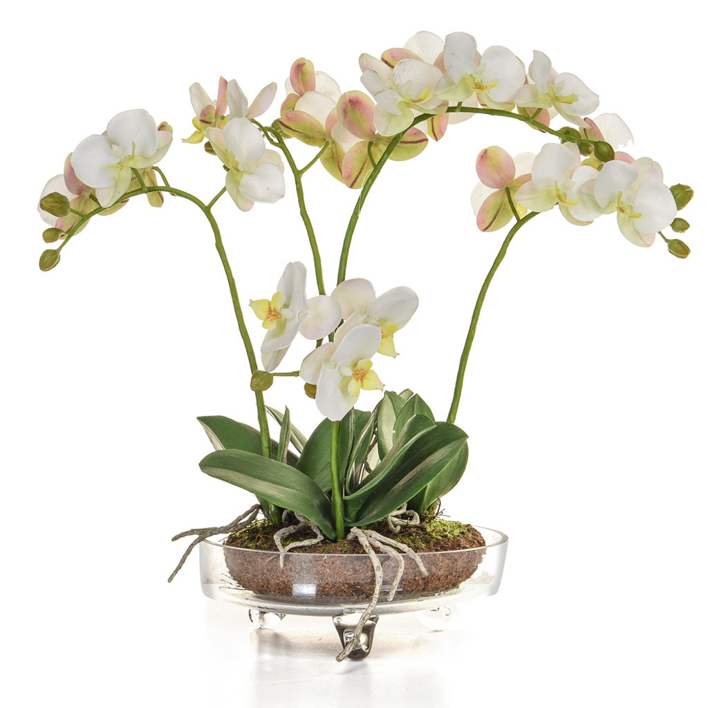 AN-Glass Orchid w/soil White GB 43cm