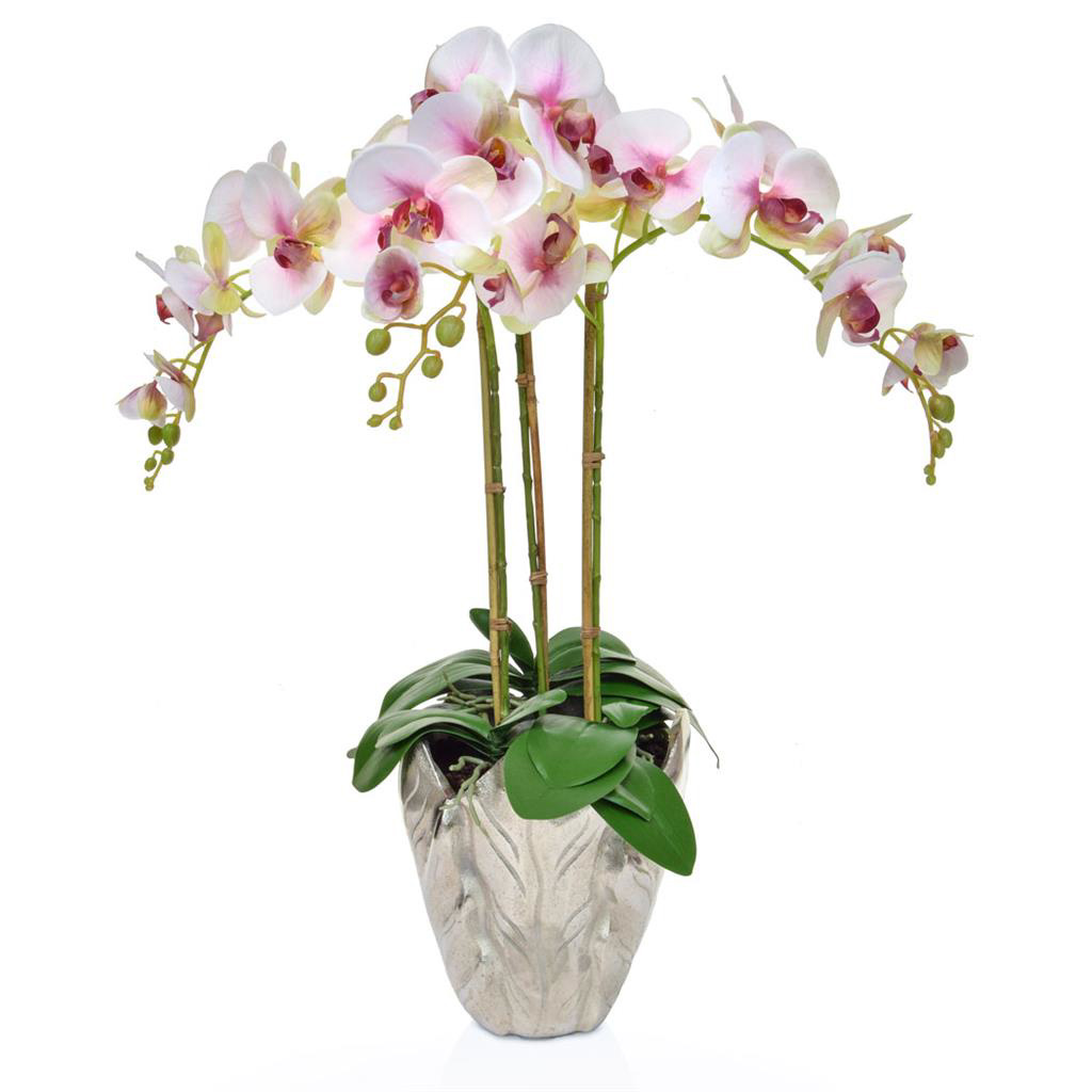 AN-Beauty Orchids XJ in Leaf Vase 70cm