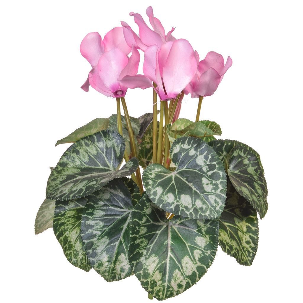 Plants Flowering Cyclamen Pink 32cm