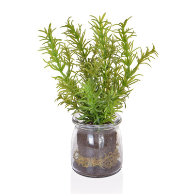 PP Rosemary in Glass Vase JA 21cm