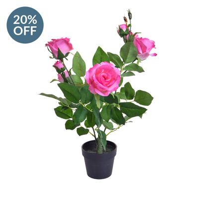 PP Rose Pink in Pot PI 35cm