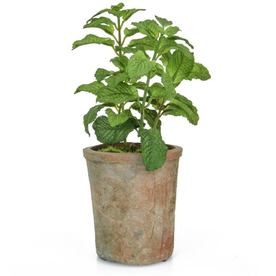 PP Potted Herb Mint GB Green 27cm
