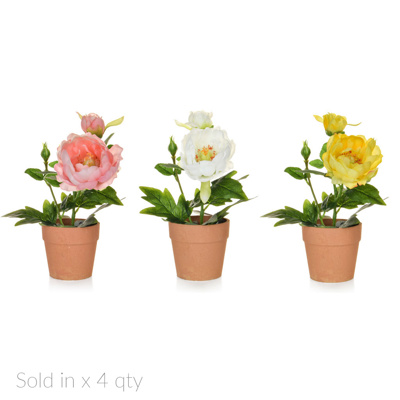 PP Peony Mix in Pot Cr/Pk/Yell GS 30cm