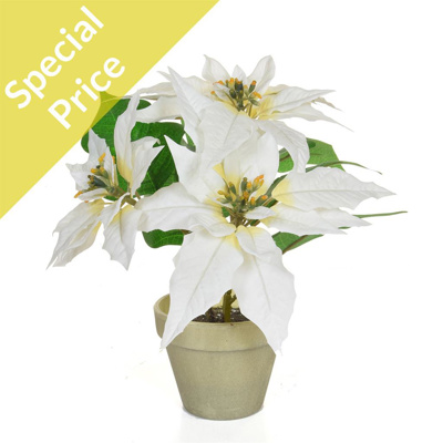 CH-Potted Poinsettia White 26cm