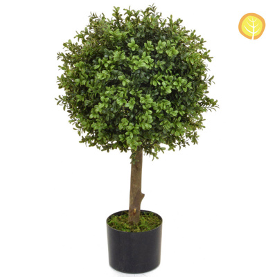 Topiary Buxus 40 Ball 80cm BA