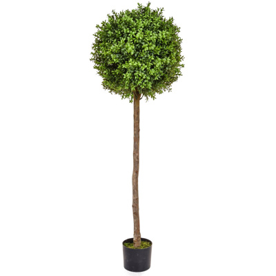 Topiary Buxus Ball Tree BA 150cm