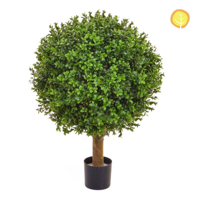 Topiary Buxus Ball 50cm