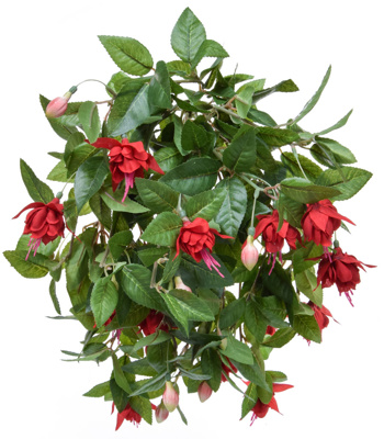 Plants Flowering Fuchsia Med Red 50cm