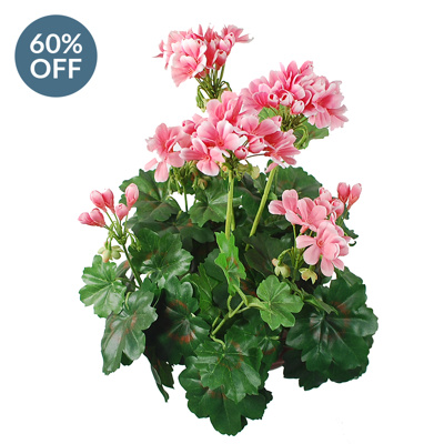 Plants Flowering Geranium B Pink 38cm