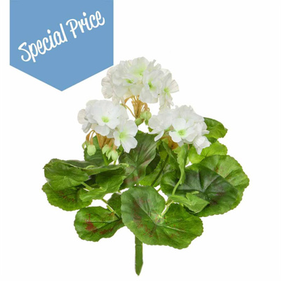 Plants Flowering Geranium A White 23cm