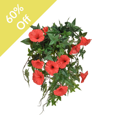 Plants Flowering Morn Glory Red 50cm