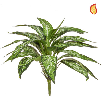 Plants Base Aglaonema Bush Varie 48cm FR