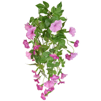 Plants Flowering Petunia Bush C Pk 82cm