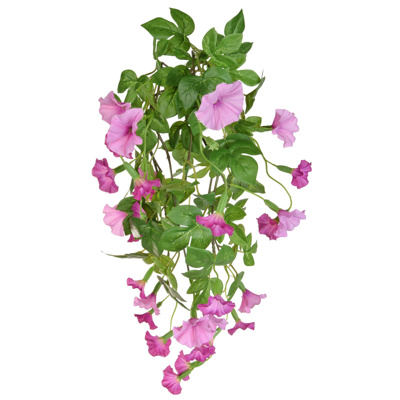 Plants Flowering Petunia Bush B Pk 55cm