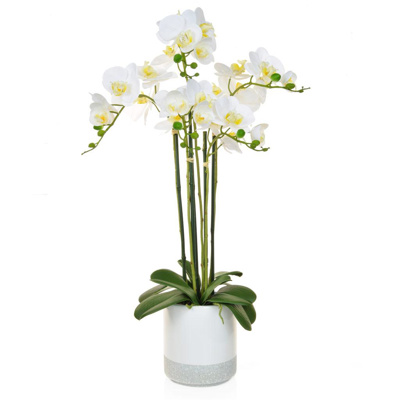 PP Phalaenopsis Real Touch W/Pot 70cm