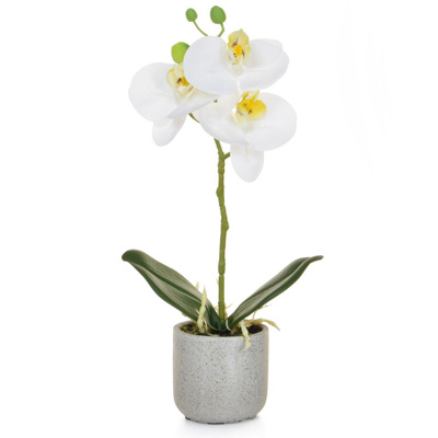 AN-Phal Real Touch White W/Pot 30cm