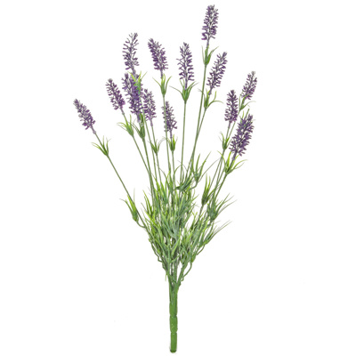 Plants Flowering Lavender GS 62cm