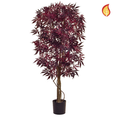 NTT Maple Japanese Burgundy 120cm FR