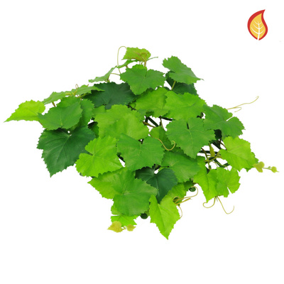 Topiary Mat Grape Vine 25x25cm Sq FR