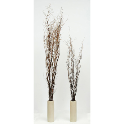 W-Wood Willow - Contorted 100cm x 25pcs