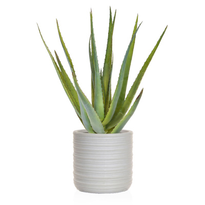 AN-Plants Aloe Single Stem Athens Pot 85cm