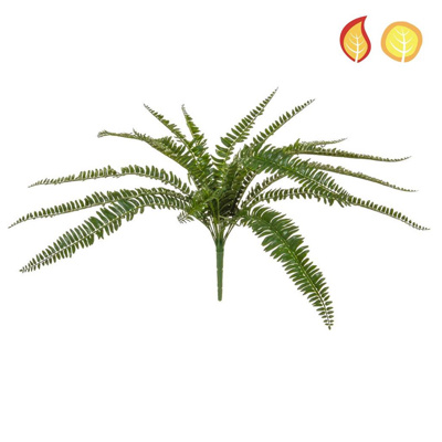 Plants Boston Fern 55cm PI FR UV
