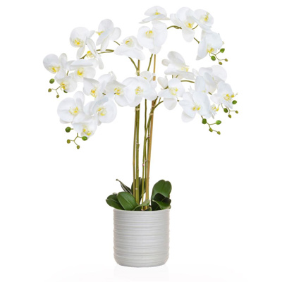 AN-White Orchid in Athen Pot 85cm
