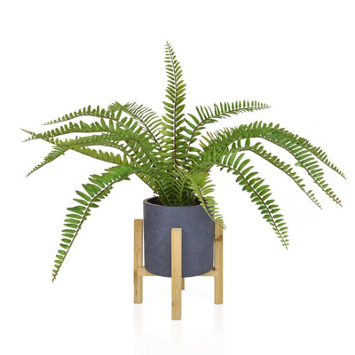PP Boston Fern in Pot JM 56cm