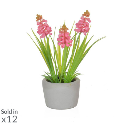PP Hyacinth Pink in Cement Pot PI 23cm