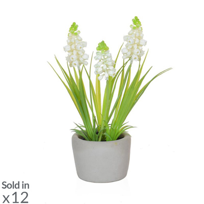 PP Hyacinth White in Cement Pot PI 23cm