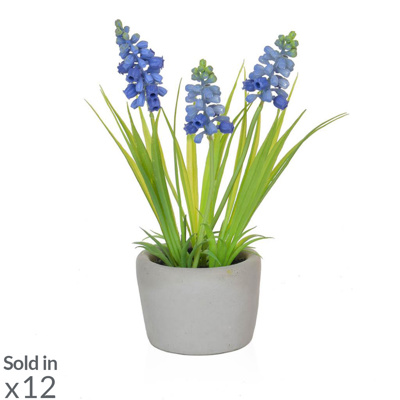 PP Hyacinth Blue in Cement Pot PI 23cm