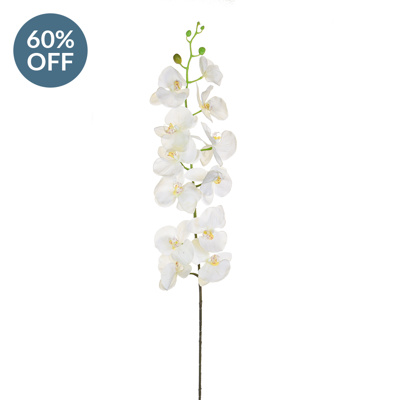 SF Orchid Phalaenopsis KL White Real