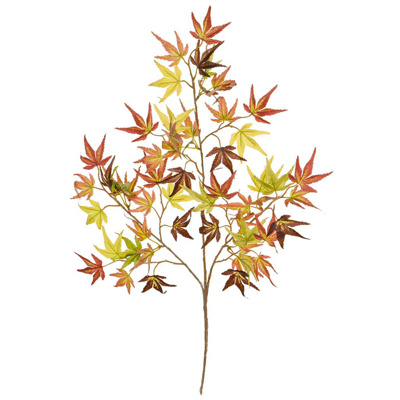 Foliage Maple Japanese L Mini Autumn