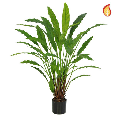 Plants Base Potted Calathea 40lvs 77cm FR