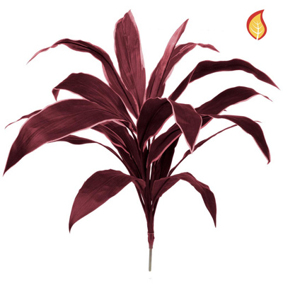 Plants Base Cordyline Burg 62cm FR