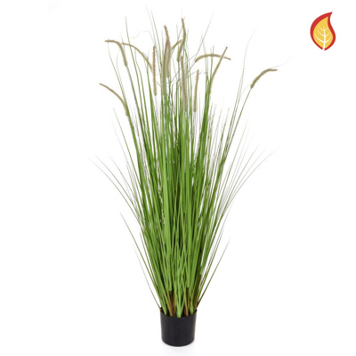 Grass Dogtail Grass E with pot 180cm FR