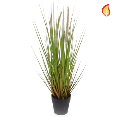Grass Dogtail Grass A with pot 52cm FR