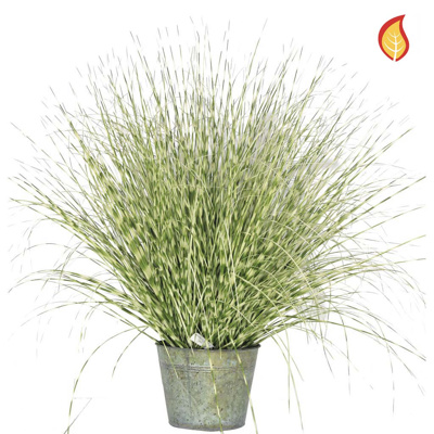 Grass Zebra Grass A in metal pot 50cm FR