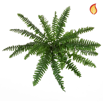 Plants Fern Boston Fern Bush 48cm FR