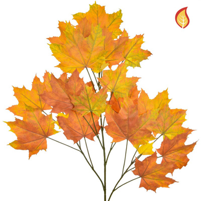 Foliage Maple North American Red 80cm FR