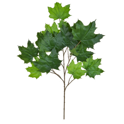 Foliage Maple North American Grn 70cm FR