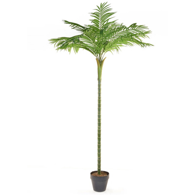 Palm Areca single stem YF 360cm