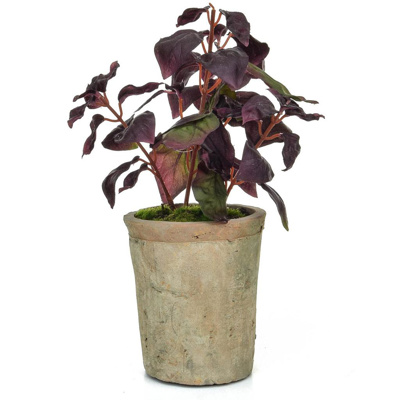 AN-Potted Herb Basil GB Burgundy 28cm