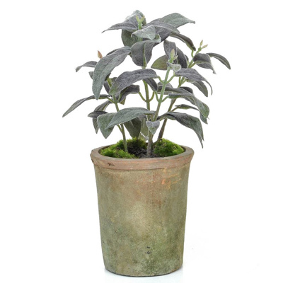 AN-Potted Herb Sage GB Green 27cm